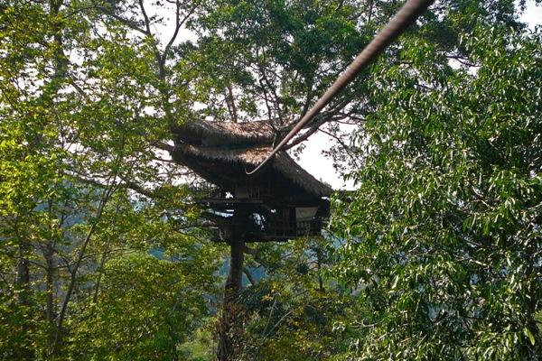 Baumhaus Mit Zipline In Laos   Gibbon Experience In Laos