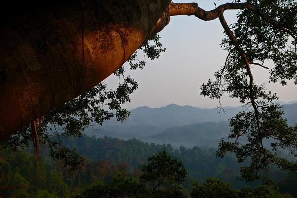 Aussicht vom Baumhaus in Laos