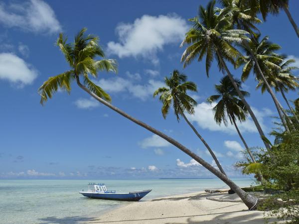 Arbeitsort Paradies unter Palmen