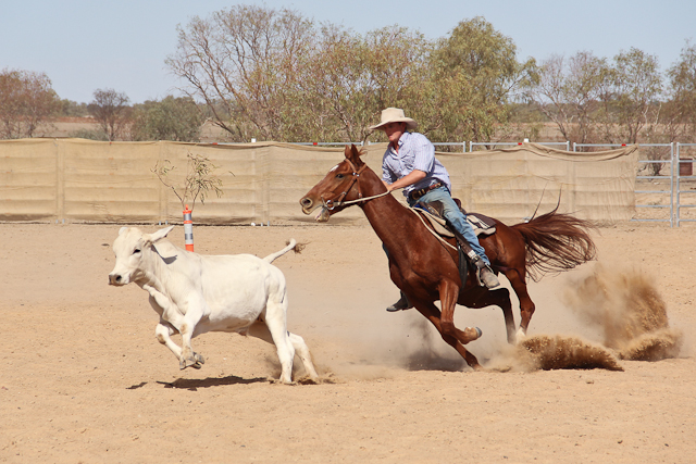 Campdraft Birdsville Rodeo
