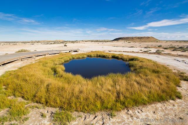 Die Quelle Blanche Cup bildet eine Oase im extrem trockenen Outback