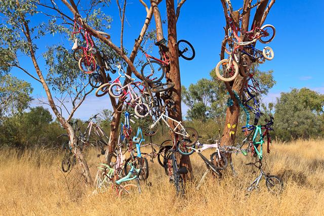 Fahrräder im Baum