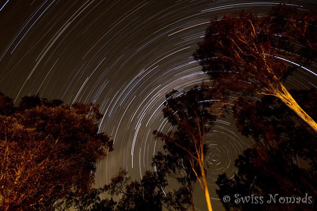 Sternenbahnen in den Bäumen