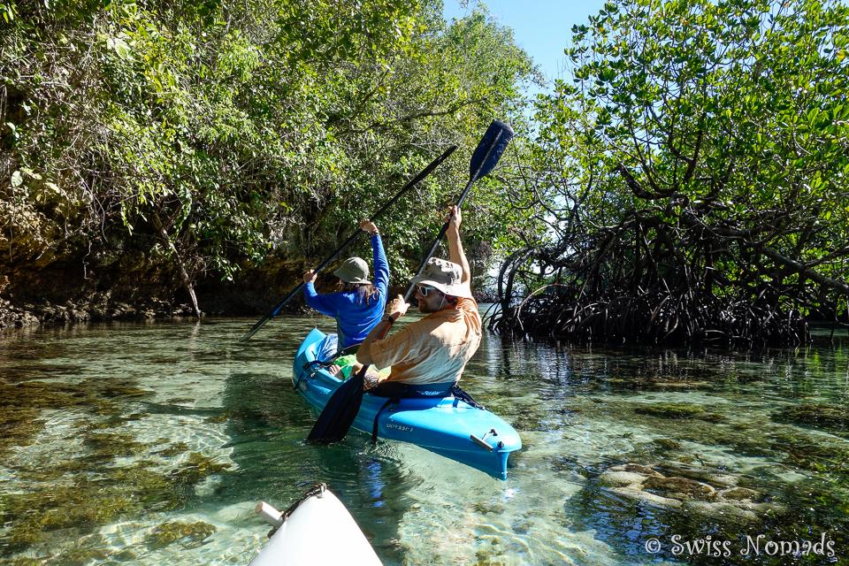 Mit dem Kajak durch die Mangroven zu paddeln ist genial