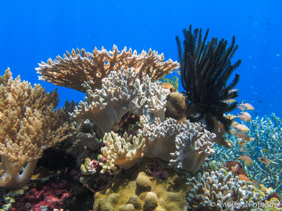 Unberührte Korallenriffe in Raja Ampat