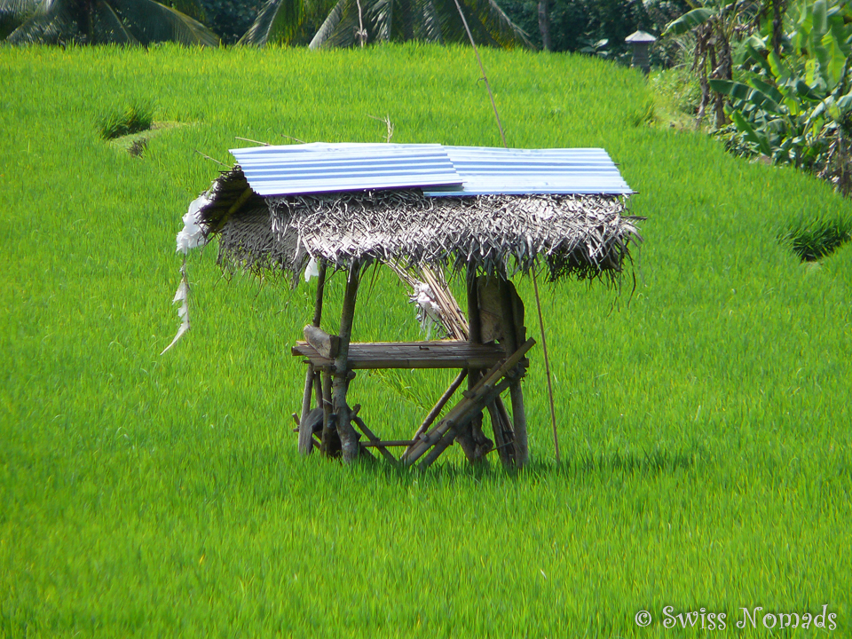 Reisfeld in Java Indonesien