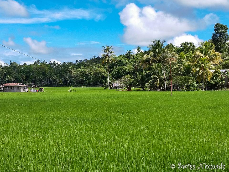 Reisfelder auf Bohol