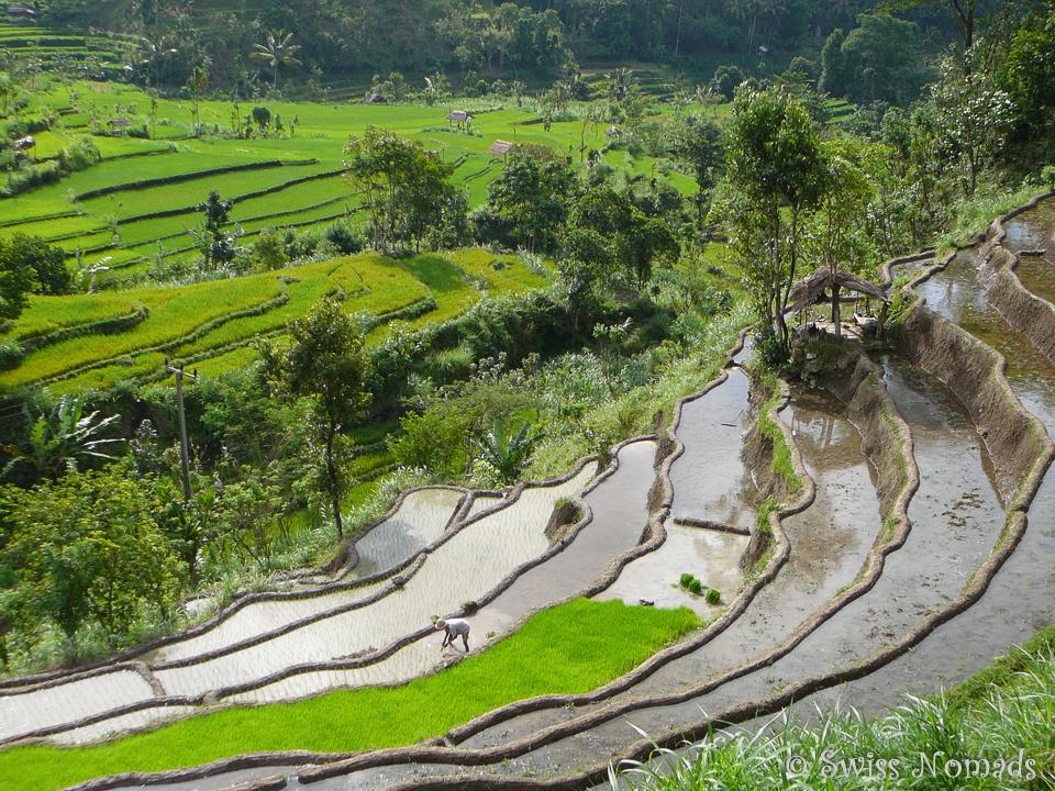 Reisterrassen auf Bali, Indonesien Reisetipps