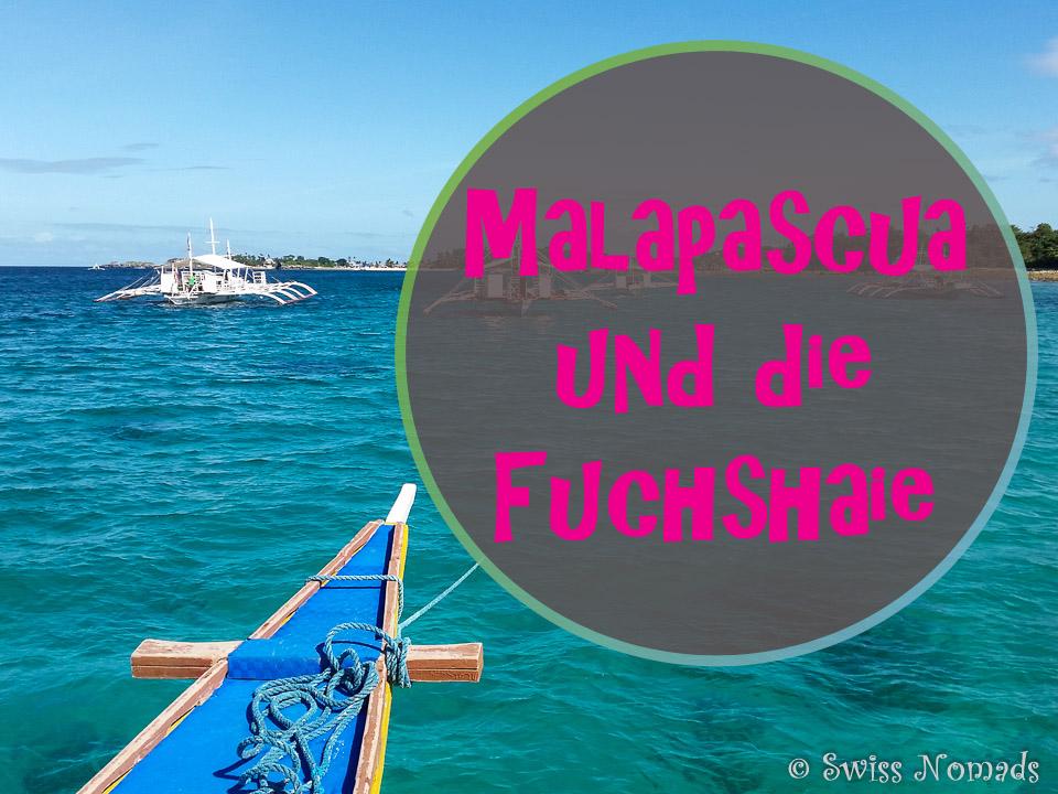 Malapascua ist bekannt für die Fuchshaie