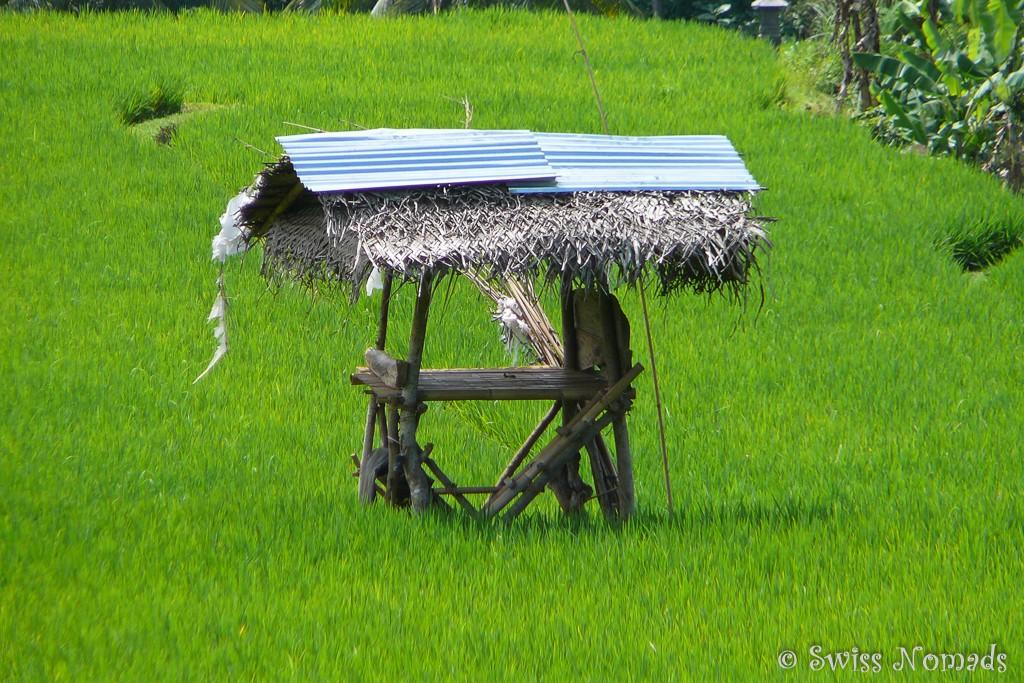 Unterstand im Reisfeld auf Bali