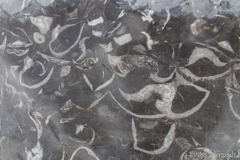 Versteinerte Meeresbewohner auf dem Rüfikopf