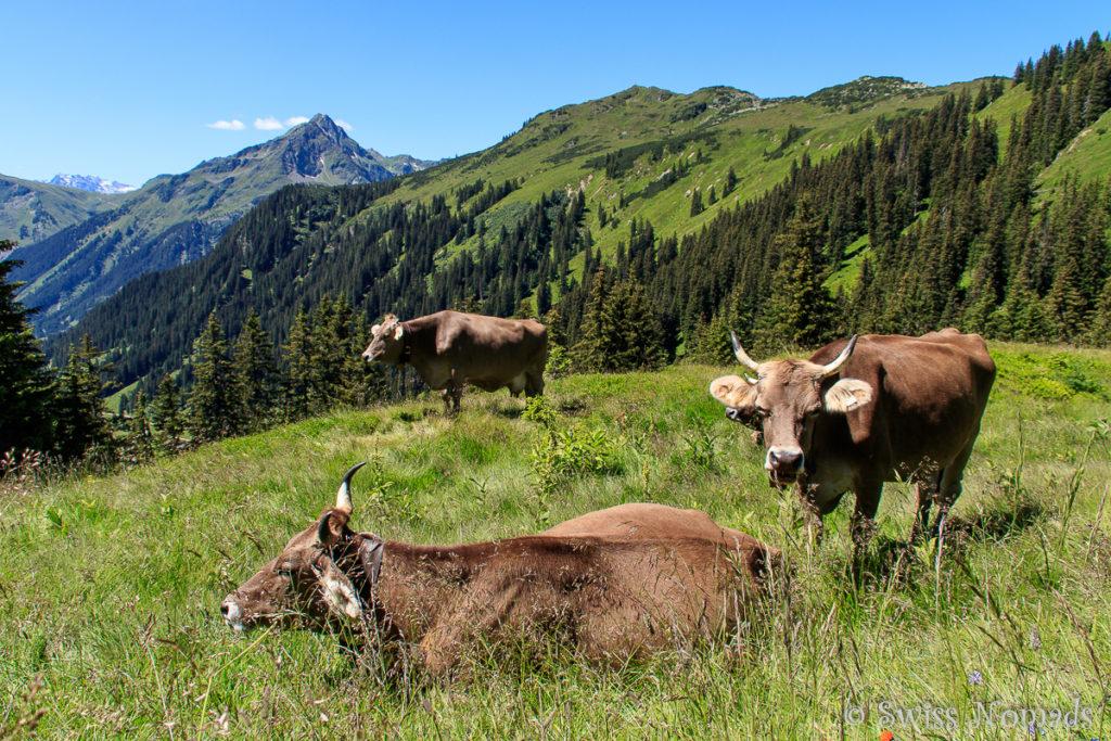 Auf dem Weg vom Sonnenkopf zur Alpe Wasserstuben