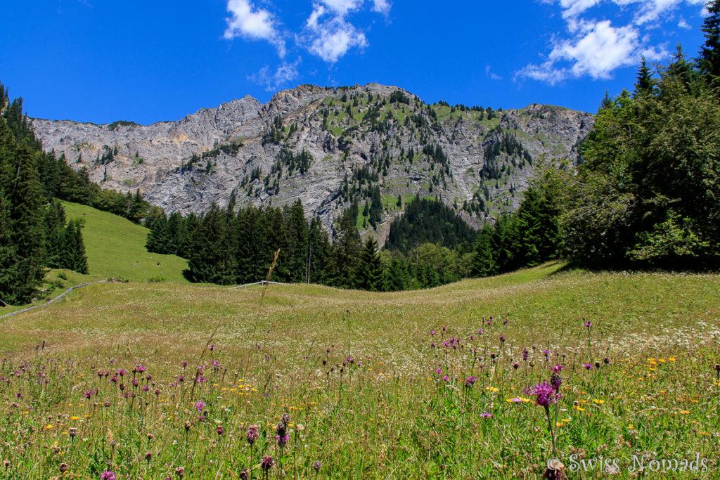 Naturwiesen im Klostertal