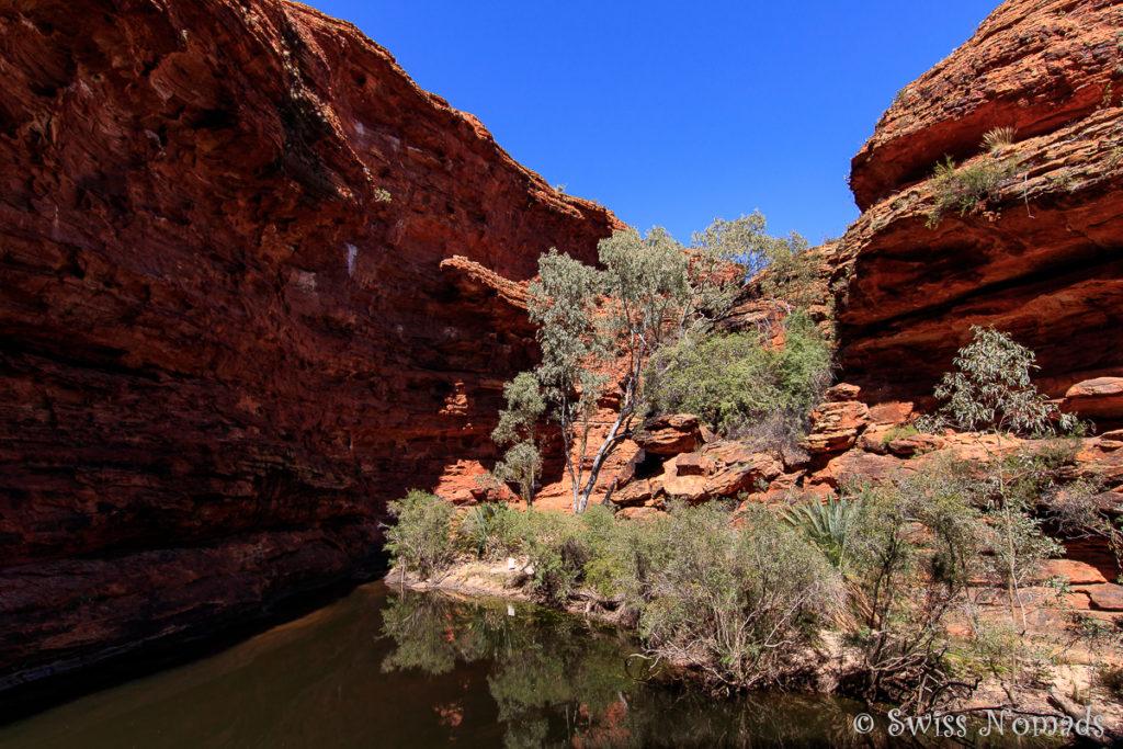Auch wenn im Bach des Kings Canyon kein Wasser fliesst, gibt es ein permanentes Wasserloch