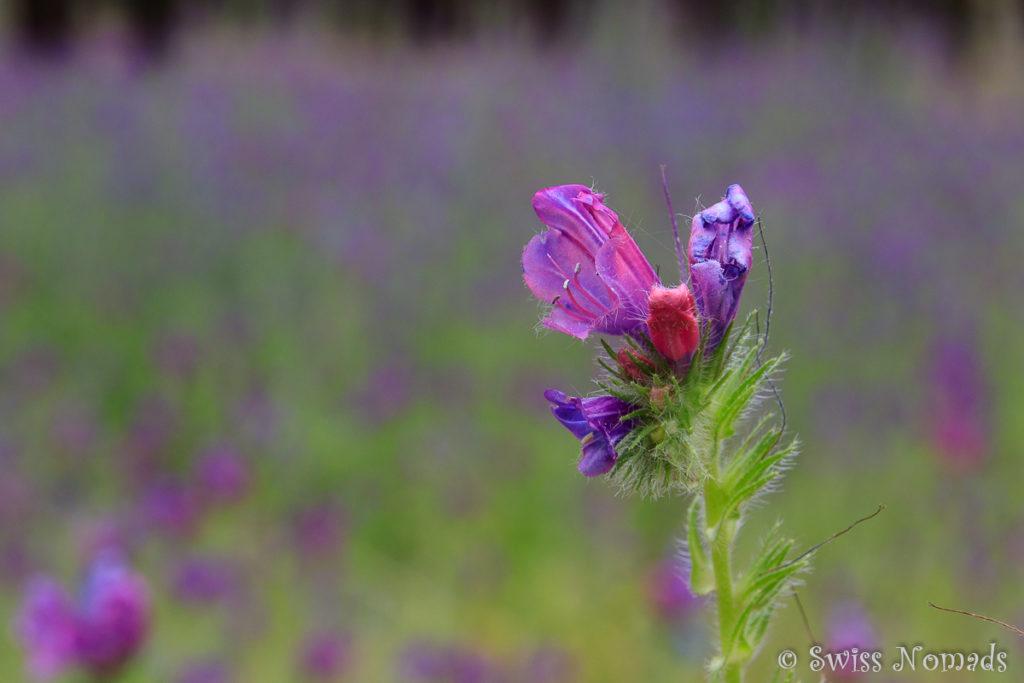 Nahaufnahme der wunderschönen Wildblumen