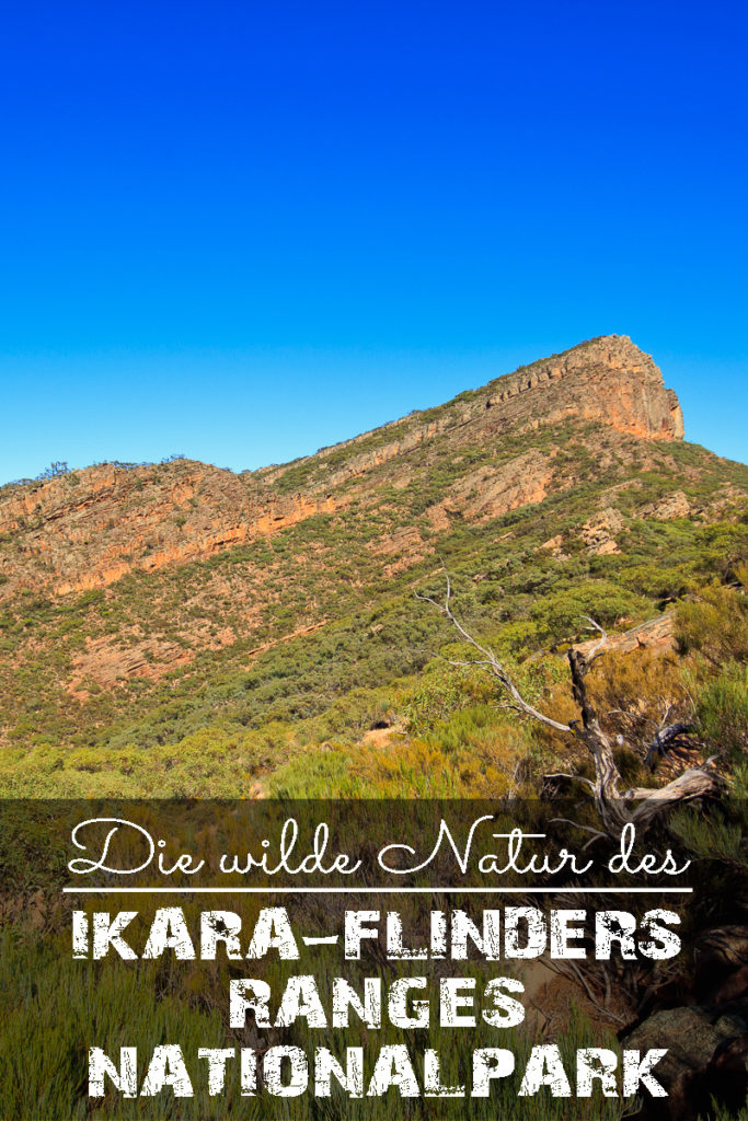 Ikara Flinders Ranges Nationalpark in Australien