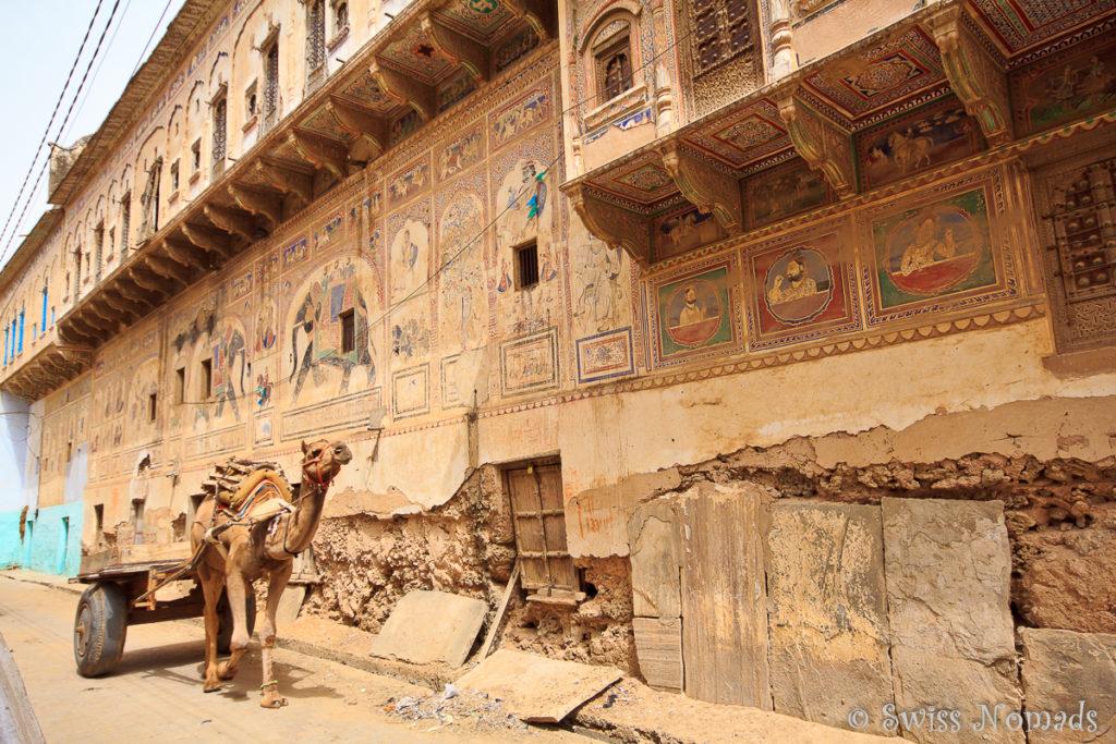 In der Shekawati Region ist das Kamel immer noch ein wichtiges Transportmittel