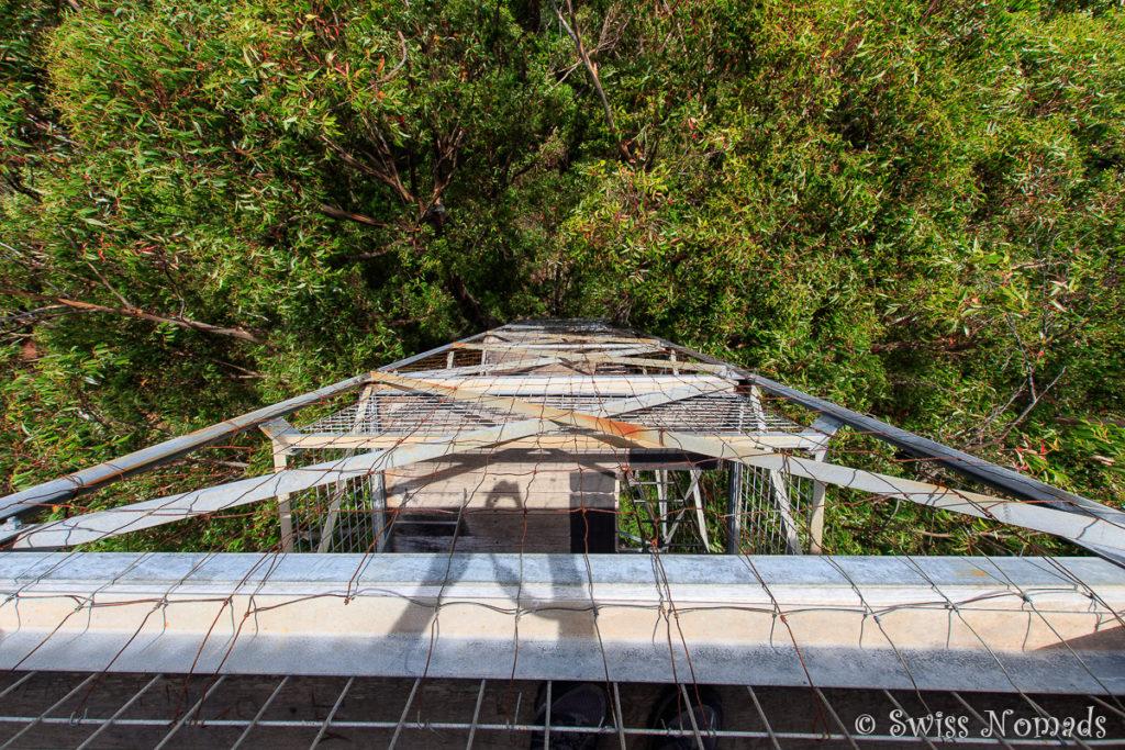 Im Metallkäfig auf dem Riesenbaum bei Pemberton
