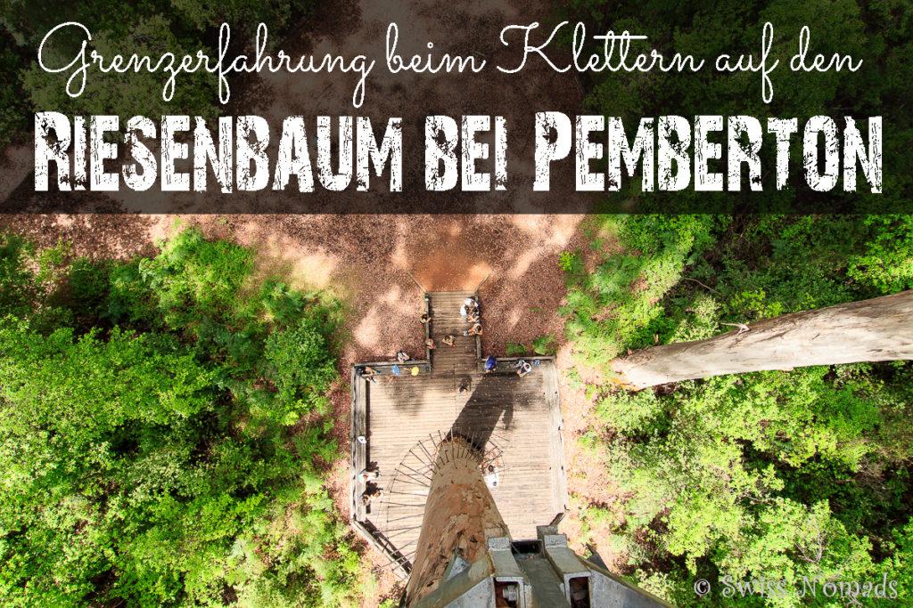 Klettern auf den Riesenbaum bei Pemberton