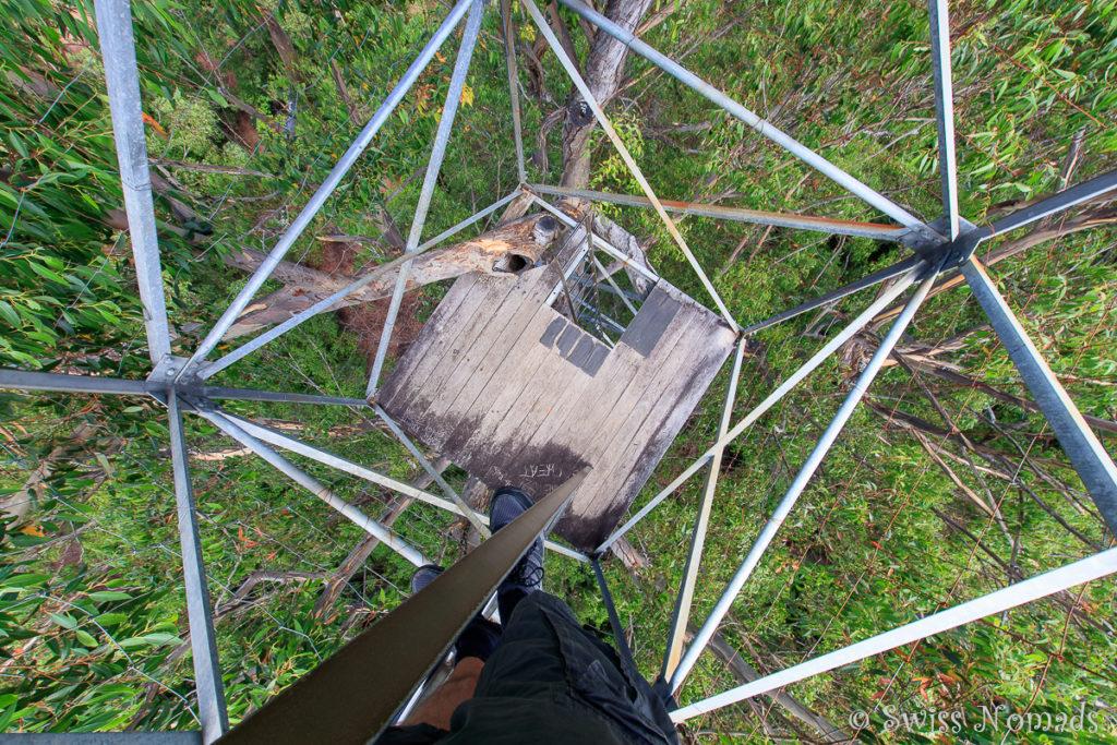 Die Leitern auf dem Riesenbaum bei Pemberton