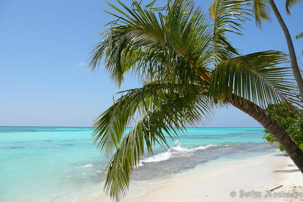 Wir leben und arbeiten auf der Malediveninsel Kuredu