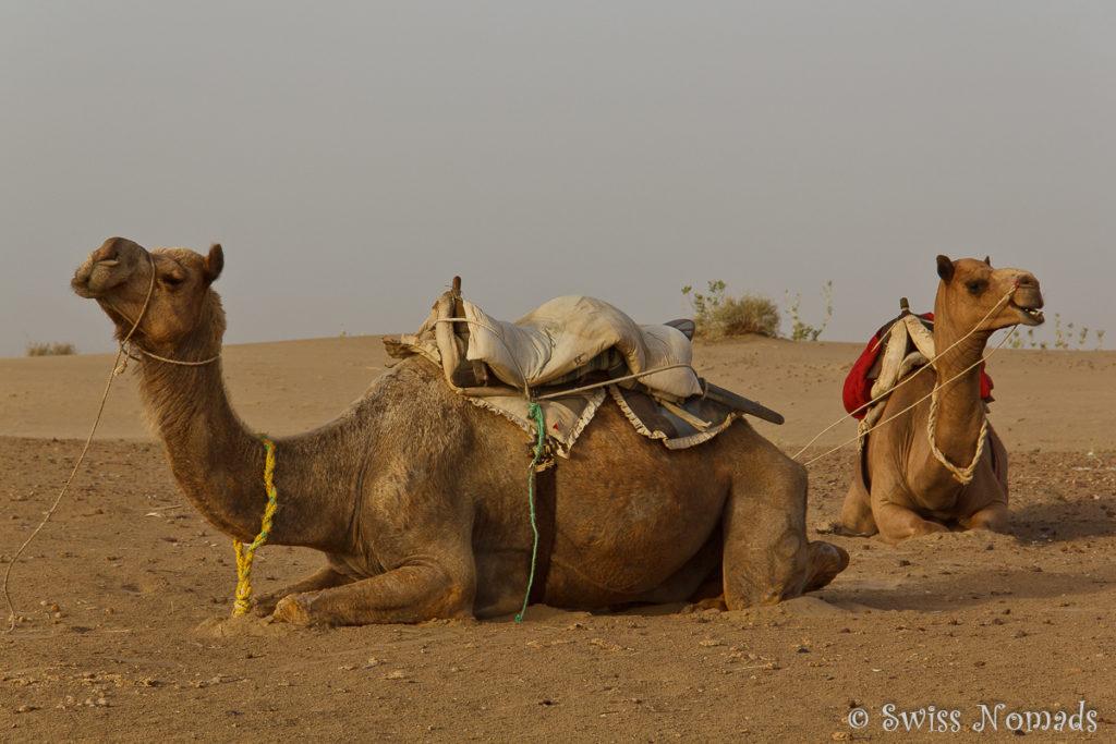 Die Kamele brauchen eine Pause
