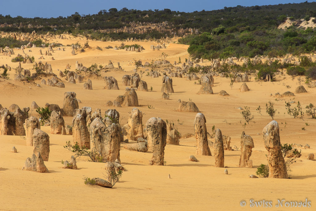 Pinnacles Desert im Nambung Nationalpark