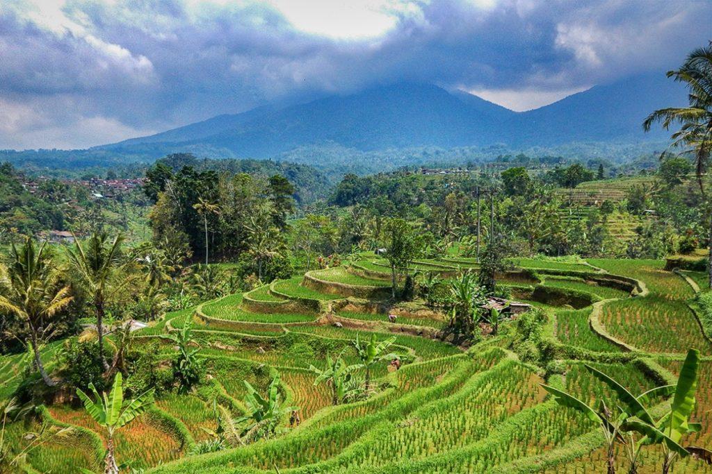 Reisterassen Jatiluwih in Bali