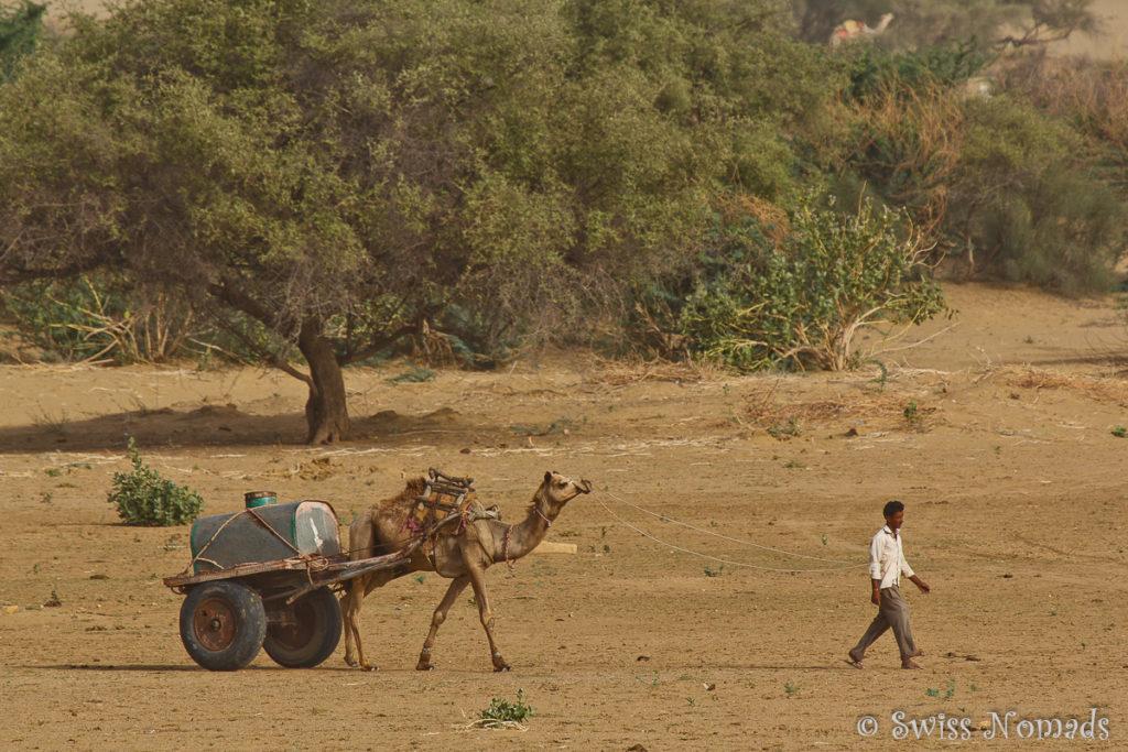 Transport von Wasser in der Thar Wüste in Rajasthan