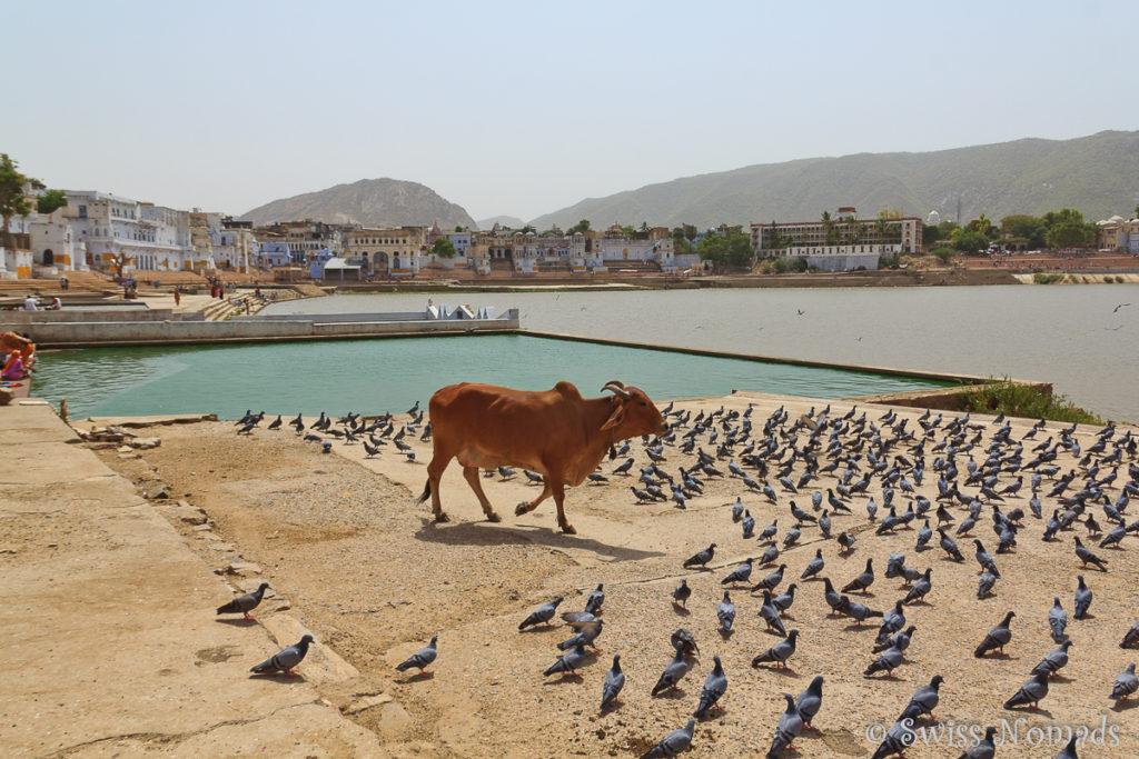 Die Bäder in der heiligen Stadt Pushkar in Rajasthan