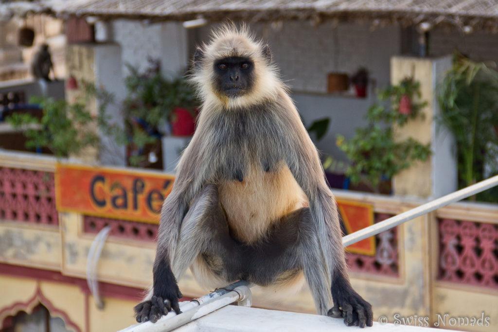 Besucher auf der Dachterrasse im Haveli in Pushkar