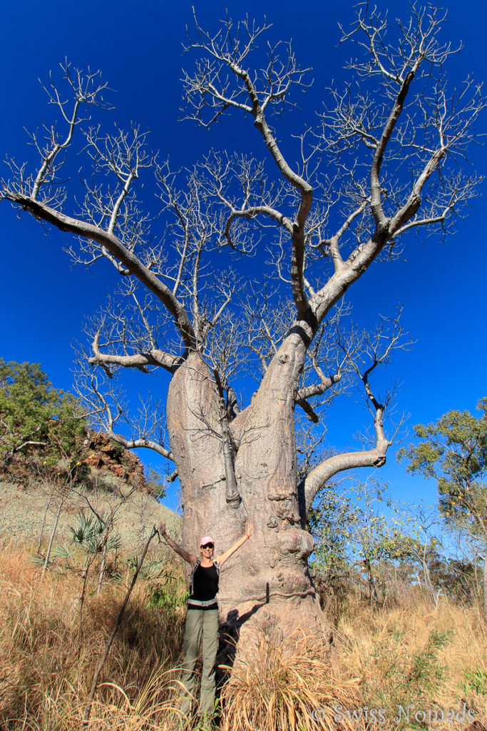 Boab Tree im Keep River Nationalpark