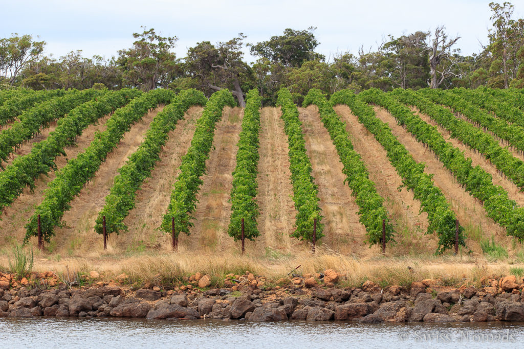 Die Weinregion bei Margaret River in Westaustralien