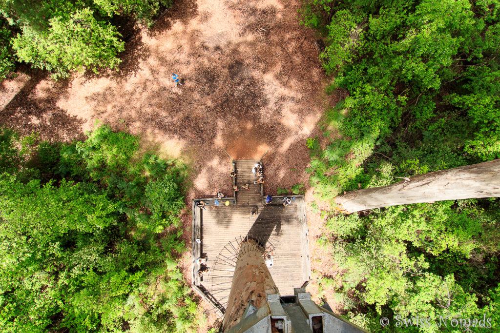 Die Aussicht vom Riesenbaum bei Pemberton in Westaustralien