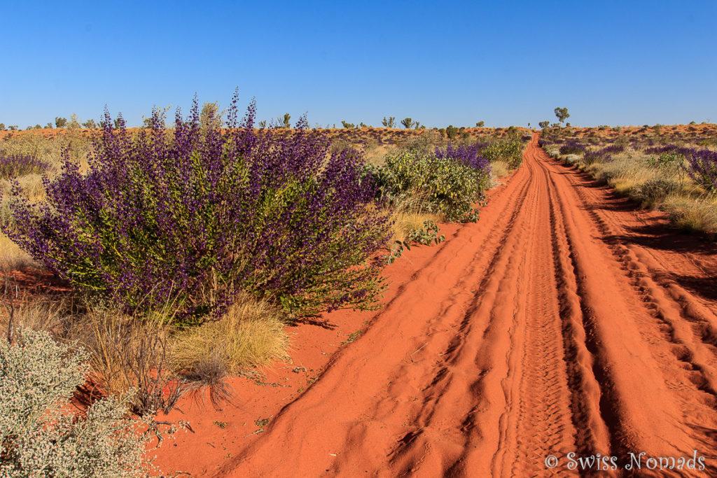 Wildblumen auf der Canning Rtock Route