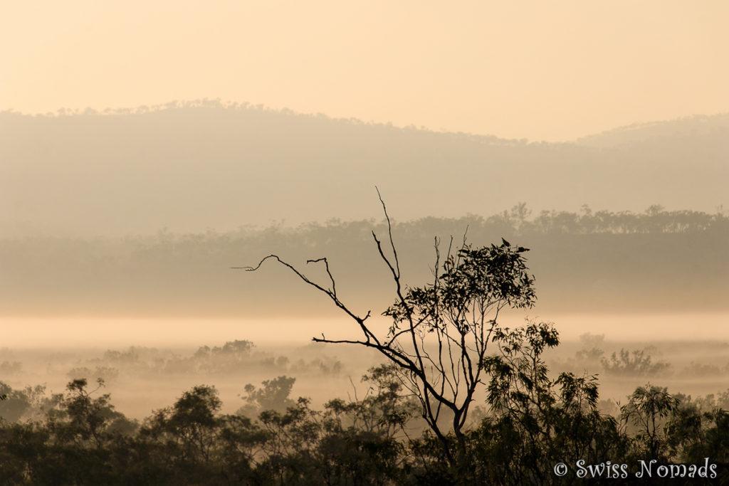 Boden Nebel am Morgen im Limmen Nationalpark
