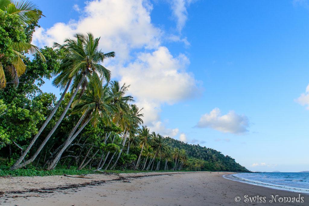 Palmen an der Bingil Bay