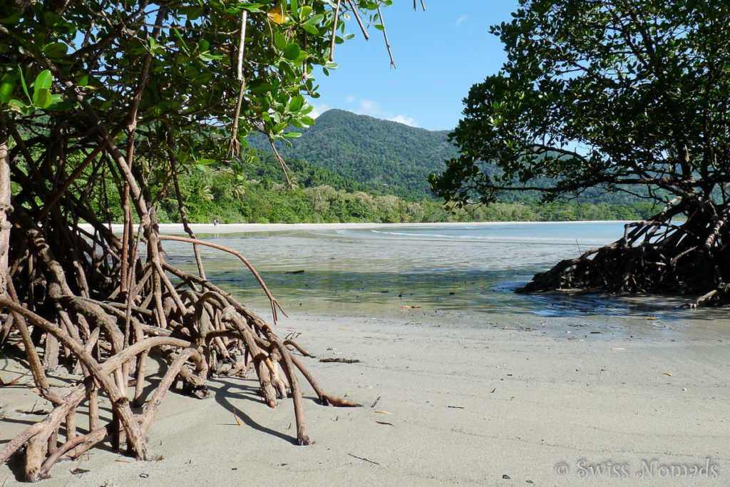 Mangroven am Cape Tribulation im Daintree Nationalpark