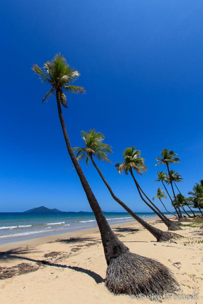 Palmen Mission Beach