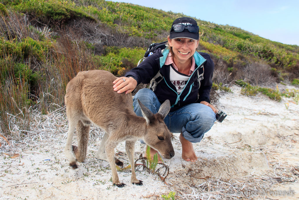 Die Kängurus der Lucky Bay sind ein Westaustralien Highlight
