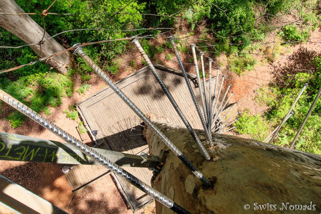 Klettern auf den Reisenbaum in Pemberton ist ein Westaustralien Highlight