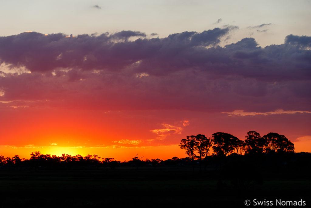 Wunderschönes Abendrot auf dem Roadtrip von Brisbane nach Sydney in Guyra