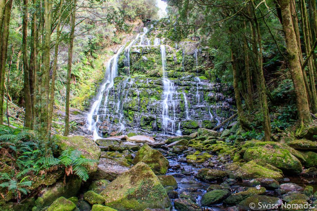 Die Nelson Falls auf dem Tasmanien Roadtrip