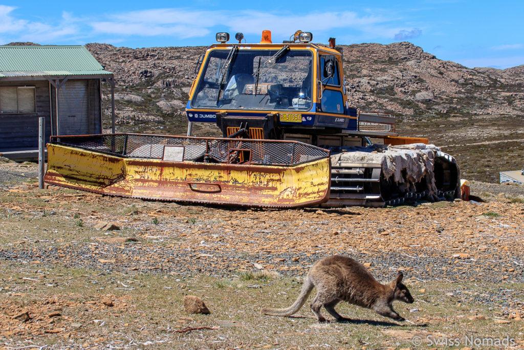 Die Wanderung im Ben Lomond Nationalpark in Tasmanien