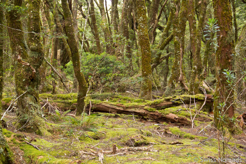 King Billy Walk im Cradle Mountain Nationalpark