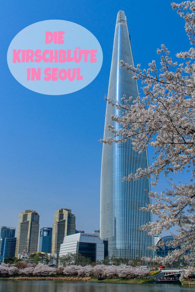 Die Kirschblüte in Seoul Korea