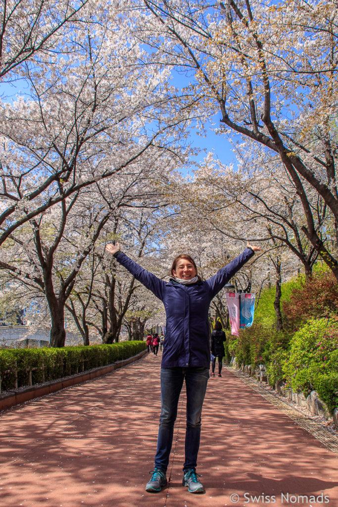 Kirschblüte in Seoul Reni