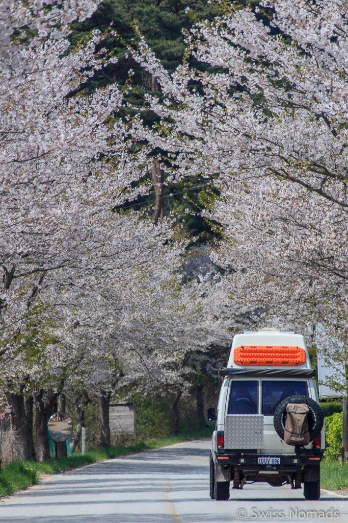 Korea Roadtrip mit dem eigenen Fahrzeug