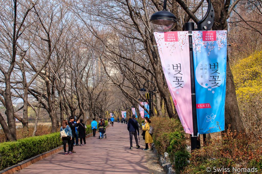 Kirschbäume im Seokchon Park vor der Kirschblüte in Seoul