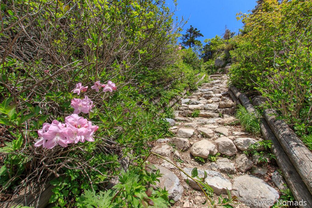 Die Wanderung zum Dacheongbong im Seoraksan Nationalpark